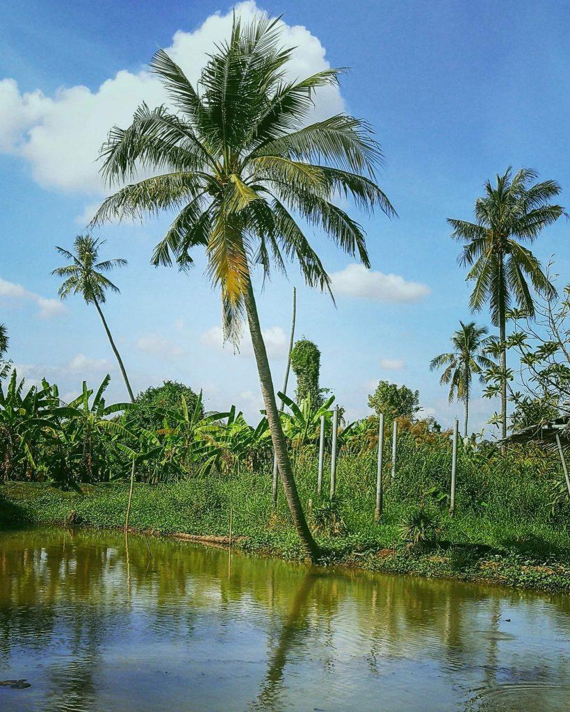 האי שבנהר. צילום: צליל וגן